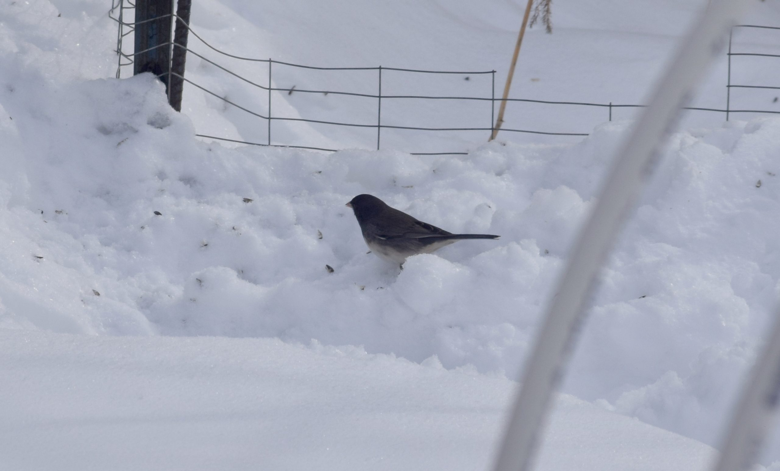 bird in snow